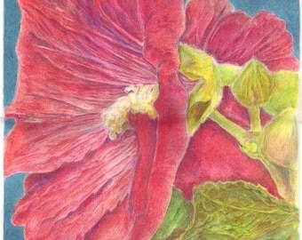 "Print of my original colored pencil piece ""Hollyhock"""