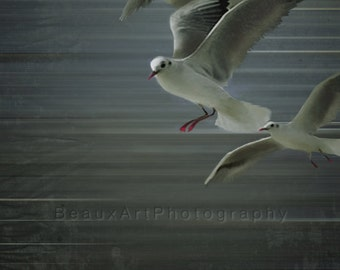 Beach Photography - Gulls