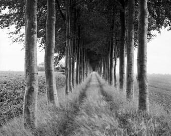 Treed Path / landscape black and white photograph, fine art, wall art print, landscape photo, b&w photography, nature wall decor