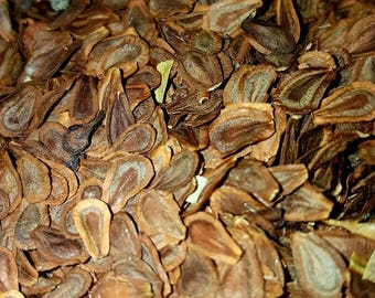 Common Milkweed Seeds (Asclepias Syriaca) (Packet of 20-30 seeds approx.)