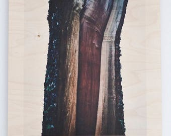 Photo of beautiful odd tree printed on plywood