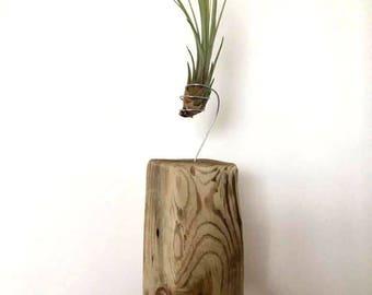 Bespoke Driftwood Air Plants
