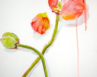 Watercolor flower painting-Poppy, Petal + Bud- original by Gretchen Kelly