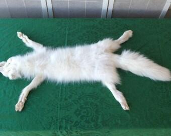 White Artic Fox Fur/Pelt