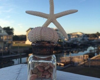 Vintage inkwell...Dancing with the Stars...mini starfish and urchin