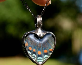 Butterfly Necklace, Heart Necklace, Blue Butterfly, Real Butterfly Wing, Wing Necklace, Butterfly Wing Jewelry, Butterfly Pendant (2765A)