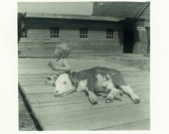 "Vintage Photo ""New Farm Additions"" Baby Calf Cow Snapshot Antique Photo Old Black & White Photograph Found Paper Ephemera Vernacular - 157"