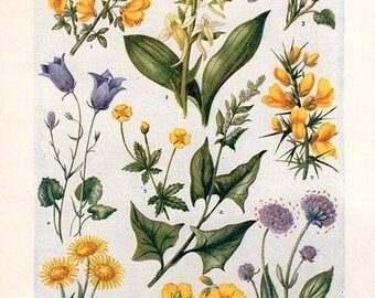 Vintage Antique 1930s Flowers botanical bookplate original floral lithograph art print illustration 5141 5142
