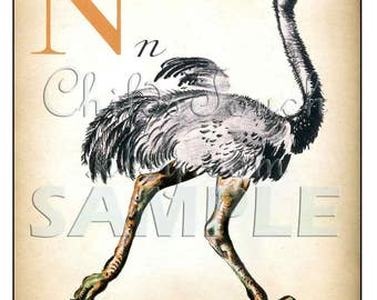 LettersN, A, V, Y and L - Lion, Nandou, Vache, Ane, Yak - Vintage French Letter  Print - 11 x 14 inches