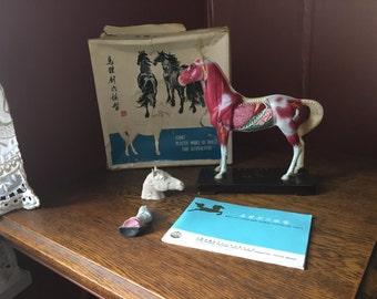 SALE- Vintage 1974 Chinese Acupuncture Horse Model With Original Box & Pamphlet