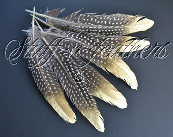 Natural Guinea feathers with GOLD tip loose, real guenea fowl wing painted feathers black brown polka dot / 6-8 in long, 6 pcs / F204G