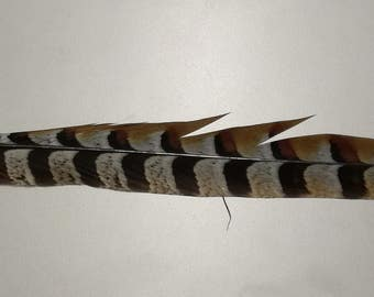 Pheasant feather in natural color 45 centimetres