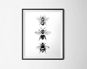 Bee Print, INSTANT DOWNLOAD, Insect Printable, Minimalist Decor, Vintage Illustration, Bug Nursery Decor, Honey Bee, Bumble Bee, Black White