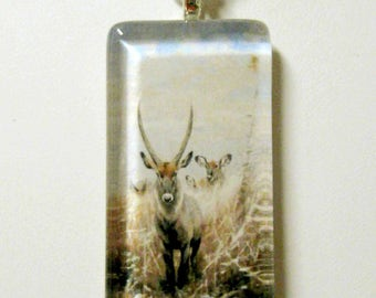 Water buck pendant and chain - WGP02-008