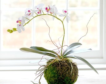 Artificial Luxury Phalaenopsis Orchid With Moss Nest Vase | Luxury Silk Orchid Arrangement |Faux Flowers By UK Florist