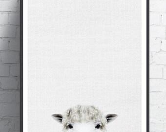 Sheep print, Farm animal print, Farmhouse decor, Farm animal wall art, Sheep art, Sheep wall art, Sheep print,Animal room decor