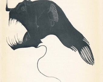 1926 Sea-Devil Fish or Angler Fish Antique Print