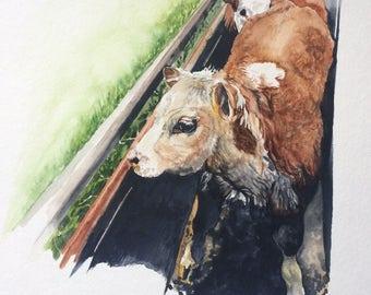 Original Hereford Cow Watercolor