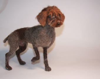 Wirehaired pointing griffon (female)