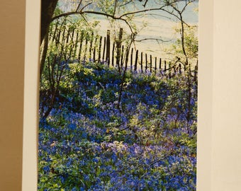 Greetings Card: The Bluebells of Kentland