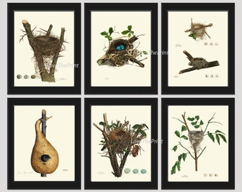 Bird Nest Print Set of 6 Beautiful Blue Eggs Antique Natural Science Tree Branch Home Bedroom Living Room Hallway Room Wall Decor to Frame