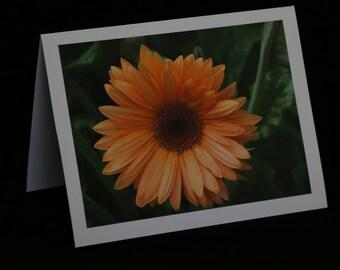 Orange Flower Note Cards