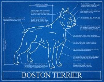 Boston Terrier Blueprint Elevation / Boston Terrier Art / Boston Terrier Wall Art / Boston Terrier Gift / Boston Terrier Print