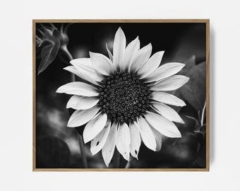 bw sunflower print, printable flower, sunflower art, sunflower decor, black white flower, sunflower print, sunflower decor, flower decor, bw