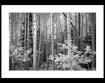 Loose Giclée Print - Signed Limited Edition - Ready to frame.