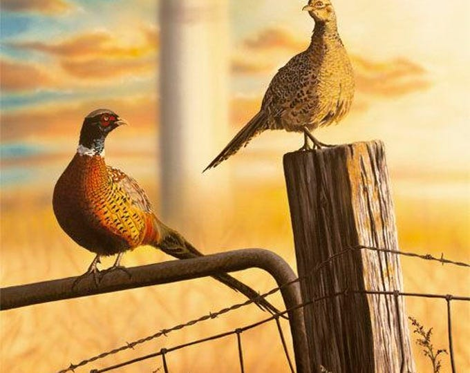 Country Morning Canvas print Pheasant Print Pheasant Art Pheasant Painting Pheasant Hunting Gift for Dad Wildlife Art by Nicole Heitzman