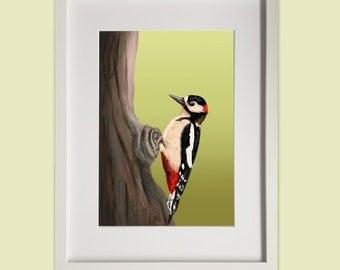 Framed Greater Spotted Woodpecker Print - Digital Art, Woodland, Wildlife, British Birds