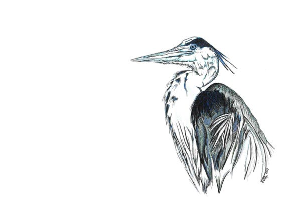Blue Herron dwawing in ink, marker and non repro blue pencil. Direct download in PDF format. Size A3