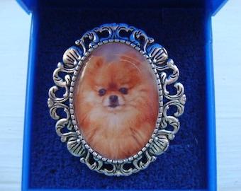 POMERANIAN Brooch, Pin brooch, Bracelet and earrings NEW