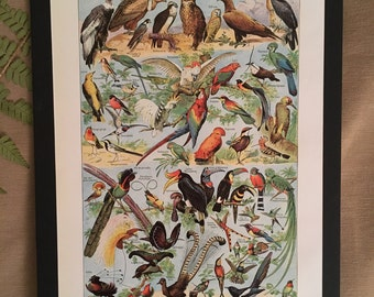 Board naturalist, history & natural sciences - zoology birds - Larousse