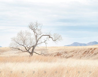 Landscape, Southwest Wall Art, Minimalist Art, Tree Art, Fine Art Photography, Prairie, Arizona Landscape, Serene, Art on Canvas, Gift