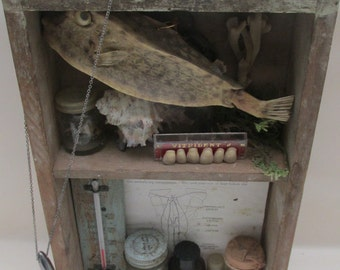 Vintage Wunderkammer ~ Cabinet of Curiosities - Nature and Science ~ Collection/Shadow Box