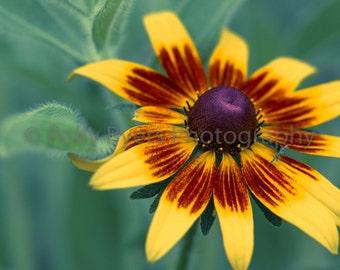 Summer Sunshine Nature Art Photography