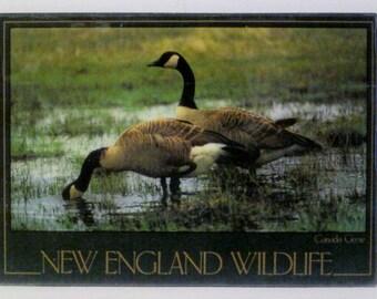 Canada Goose New England Wildlife Refrigerator Magnet