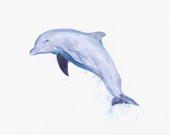 Dolphin Fine Art Animal Giclee Print