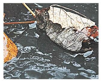 Fallen Leaves - Canvas Gallery Wall Art - 8 x 10, 16 x 20, 24 x 36