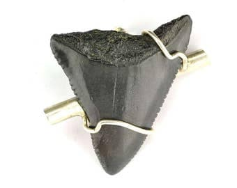 Carcharodon Megalodon tooth pendant