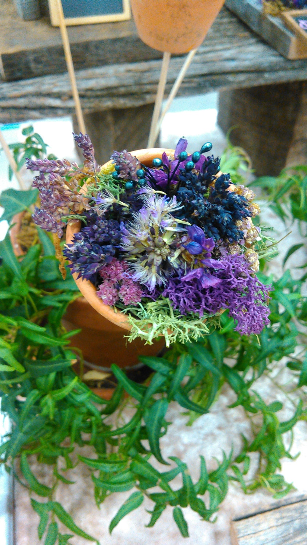 Natural craft supplies flower seeds for gardening dried for Dried flowers craft supplies
