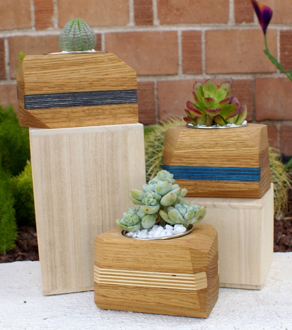 Modern Geometric Wood Succulent Planter with Accent Stripe