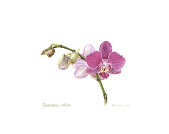 orchid print moth orchid pinkmothers day gift for her housewarming wedding gift wall art salon spa garden serene daccor: day orchid decor