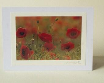 An original photo-art card featuring a field of poppies