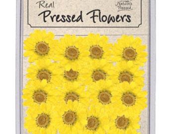 Yellow Daisy 25 Flowers