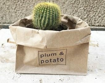 "mini ""california gold"" cactus in a peat pot"