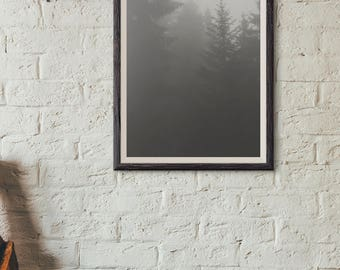 Dark Pine and Fog Photograph Poster