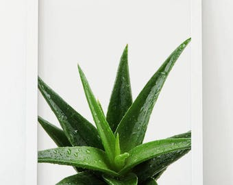 Aloe Vera Plant, Aloe Vera, Aloe, Succulent Print, Succulent Photo, Cactus Print, Cactus Wall Art, Plant Photo, Water, Green Wall Art