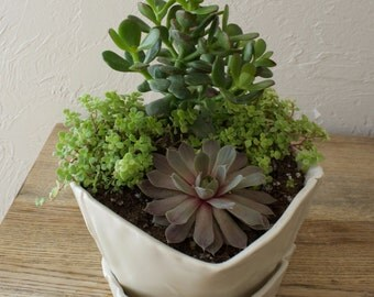 Porcelain Planter, succulents, indoor plants, paper, saucer included